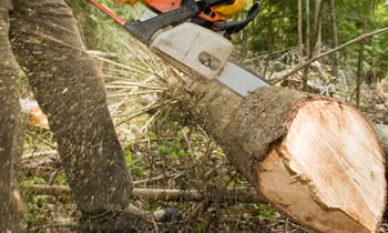 Tree Service in Saint Petersburg FL Tree Service Estimates in Saint Petersburg FL Tree Service Quotes in Saint Petersburg FL Tree Service Professionals in Saint Petersburg FL