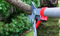 Tree Pruning Services in Saint Petersburg FL
